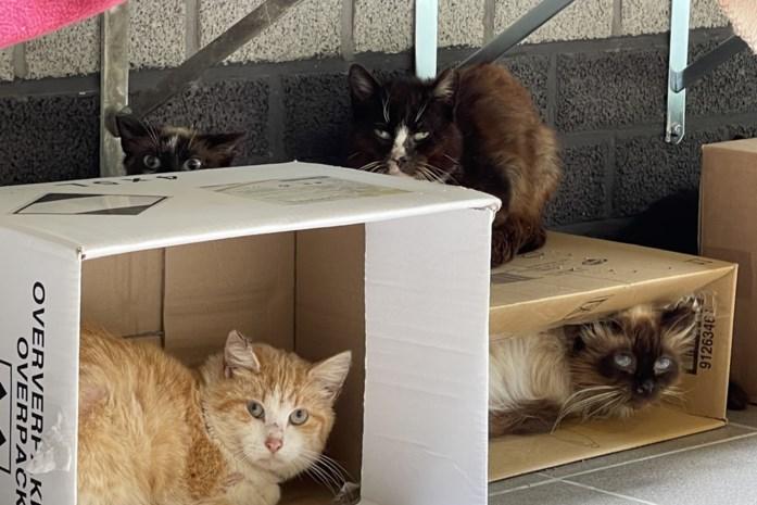 """Kattenstad zoekt baasjes op West-Vlaamse platteland voor tientallen verwaarloosde boerderijkatten: """"Verwacht geen kopjes of aaitjes"""""""