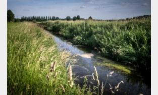 """Veel te hoge PFOS-waarden in Limburgse waterlopen: """"Je eet best geen vis die je hier vangt"""""""
