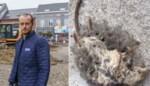 """""""Ze bijten de meubels kapot en laten uitwerpselen achter"""": wijk geteisterd door hardnekkige muizenplaag"""
