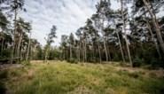 Ontbossing van 37 hectare nodig voor natuurbeheer in Molenheide
