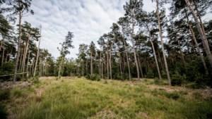 Gemeente gaat 37 hectare bos kappen voor natuurbeheer in Molenheide