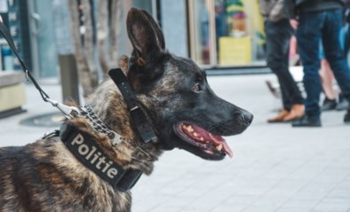 Zes maanden cel voor dronkenlap die politiehond wilde aaien en beet opliep