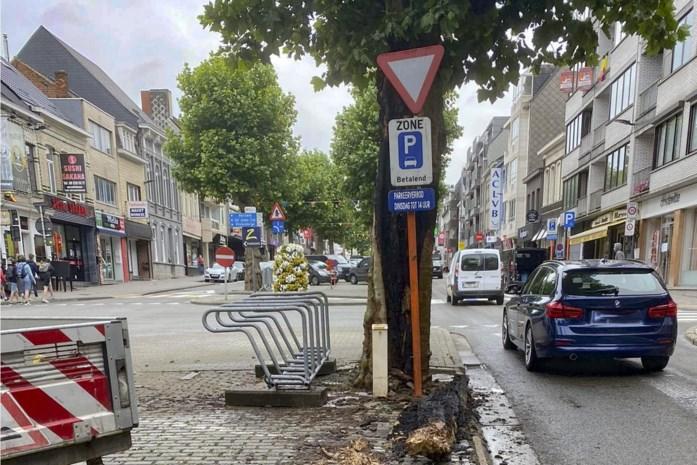 """Karakteristieke boom loopt zware schade op: """"Maar geen probleem voor de stabiliteit"""""""