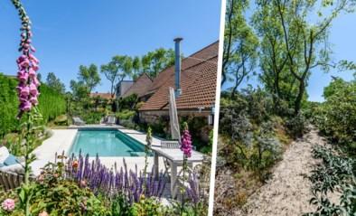 Een zwembad, biotoopvijver én bloemenparadijs in een duinenlandschap: de zomertuin van Guy en Katia