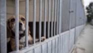 Recordaantal meldingen dierenmishandeling in 2020