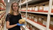 Sint-Truiden bewaart archeologische vondsten optimaal in nieuw depot