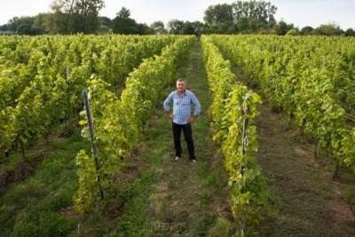 """Op bezoek in wijndomein Pres de Gand: """"De naam? Ik was het moe altijd uit te leggen waar mijn domein ligt"""""""