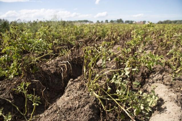 Landbouwnieuws: Vlaamse regering erkent droogte 2020 officieel als ramp