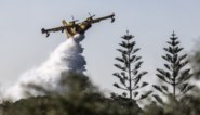 Bosbranden teisteren Griekse eiland Kefalonia
