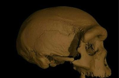 """Dikke schedel, grote hersenen en véél tanden: wie of wat was de 'drakenman'? """"Evolutieleer wordt door elkaar geschud"""""""