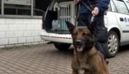 Politie kampt met groot gebrek aan drugshonden