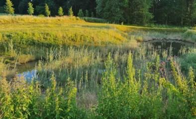 Twee nieuwe bufferbekkens moeten Kerkom vrijwaren van wateroverlast