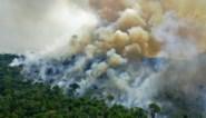 Ontbossing van Amazonewoud breekt triest nieuw record in juni
