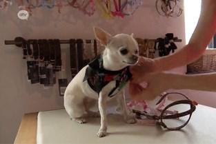 Bij Petit Loup steken ze de honden in een nieuw jasje