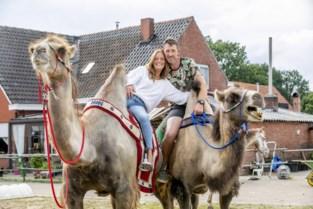 """BAASJES EN BEESTJES. Karin en Steven maken ritjes op kameel: """"Big Iwan was te koppig voor het circus"""""""