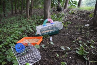 Hamsterkooien gedumpt aan oprit snelweg, diertjes onvindbaar