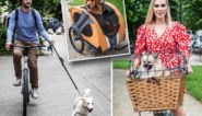 Fietsen met de hond: dat loopt (niet) op wieltjes