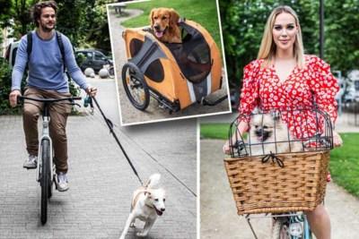Fietsen met de hond: hoe doe je dat veilig en vindt je viervoeter dat wel leuk?