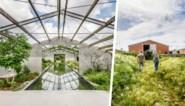 Een vroeger varkensbedrijf omgetoverd tot het hart van een voedselbos: de zomertuin van Hans en Céline in Ardooie