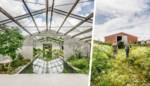 Groenten, fruit én bladeren die als toiletpapier kunnen dienen: de zomertuin van Hans en Céline