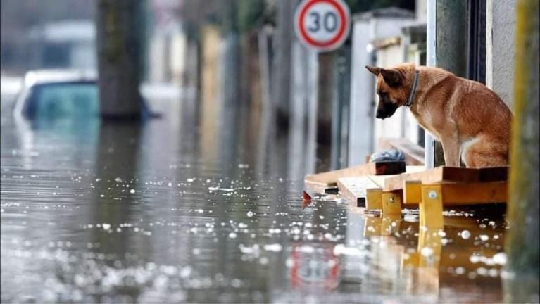 Antwerpse vriendinnen starten inzamelactie voor dieren uit overstroomde gebieden