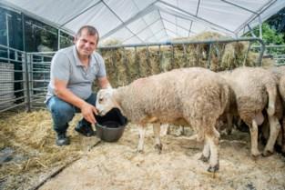 Limburgers gaan offerfeest in hun thuisland vieren