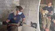 Hartverwarmend: brandweer bevrijdt hond die vijf dagen lang vastzit tussen betonnen muren
