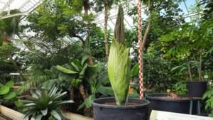 Natuurpunt en Plantentuin Meise vragen hulp om zaden van bedreigde planten te verzamelen