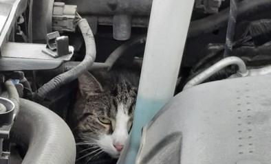 Wie herkent kat die in motorblok auto kroop aan vaccinatiecentrum Voorkempen?