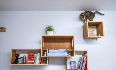 CATchy interieur