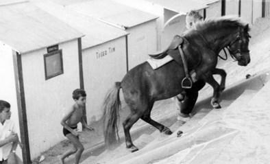 """Groetjes uit 1963: """"Het is de laatste zomer dat hij onbekommerd achter een pony op het strand zal lopen"""""""