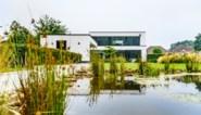 Een combinatie van strak en wilde natuur, met een poel als bindmiddel: de zomertuin van Rudi en Suzanne in Tessenderlo