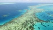 Great Barrier Reef toch niet op lijst bedreigd werelderfgoed na lobbywerk van Australië
