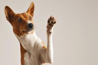 Opnieuw hondenwedstrijd tijdens jaarmarkt