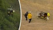 Paard raakt even in paniek na spectaculaire reddingsactie met helikopter