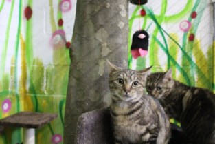 't Kattenhuisje vangt structurele steun