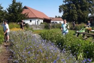 Talander opent bloemenwinkel met zelfbediening: pluk je eigen boeket