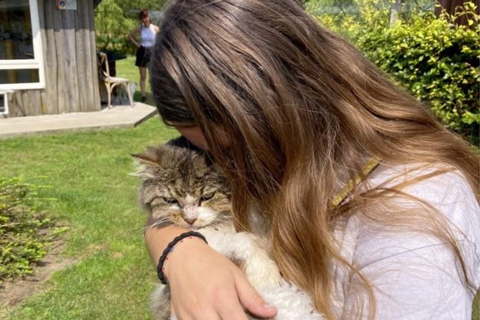 """Dierenthuisje bezorgt lang verdwenen katten terug aan baasjes: """"Snotteren van geluk"""""""
