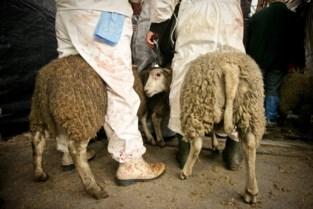 Kersvers dierenwelzijnteam van de politie ontdekt illegale slachting