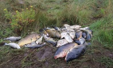 """Waterkwaliteit in beken fors achteruit door overstromingen: """"Duizenden tonnen vis dood door gebrek aan zuurstof"""""""