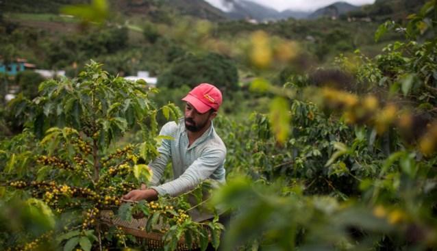 Koffiebonen in geen 7 jaar zo duur: gaan we dat ook merken aan ons kopje koffie?