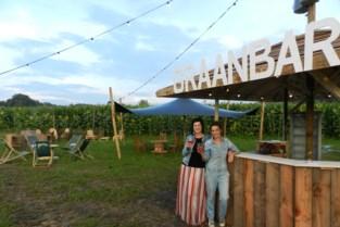 Zomerbar verscholen in cirkel op maïsveld: Graanbar is klaar voor eerste bezoekers