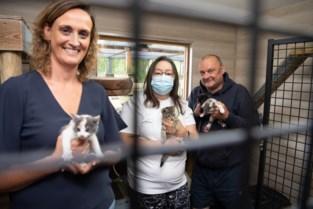 """Asiel 't Kattenkwaad krijgt structurele steun en plant uitbreiding: """"Geld is nodig voor dagelijkse werking"""""""