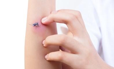 Vooral niet krabben: wat helpt echt tegen muggenbeten en hoe vermijd je jeuk?