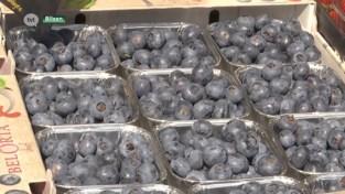 Fruitteler geeft gratis bessen weg uit protest