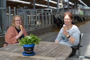 Lucrèce (55) opent boerderijwinkel: vers hoeveijs met zicht op de koeien