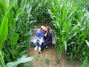 Ga op zoek naar het verdoken 'kusbankje' in dit gigantische maisdoolhof in Waltwilder