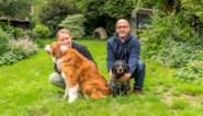 """Opvallend veel baasjes willen af van hond na eenzame coronaperiode: """"Puppy's blijven niet schattig"""""""