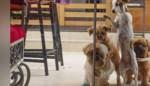 Honden staan voor gesloten deur, maar bundelen kracht om toch te kunnen ontsnappen