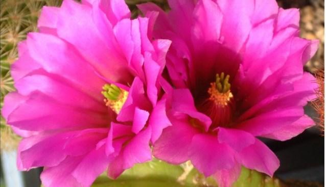 Prikkelende beurs voor liefhebbers van cactussen en vetplanten
